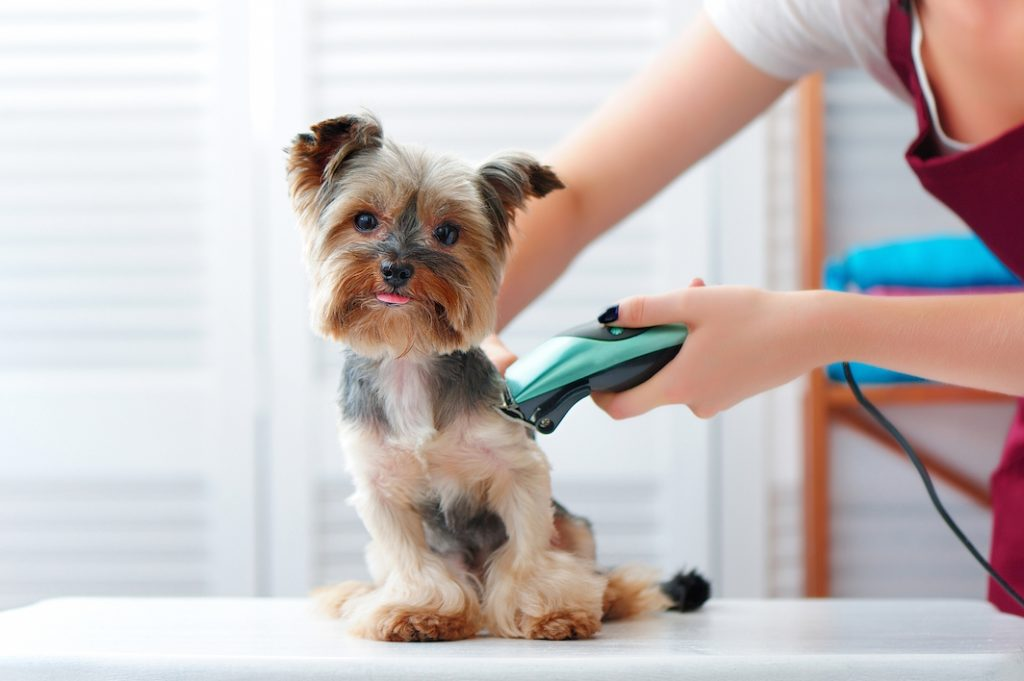 Mobile pet groomers near me